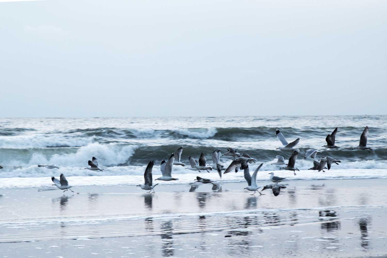 Kurzurlaub in Holland Nordsee Wassenaar - steinbauer-groetsch©2016