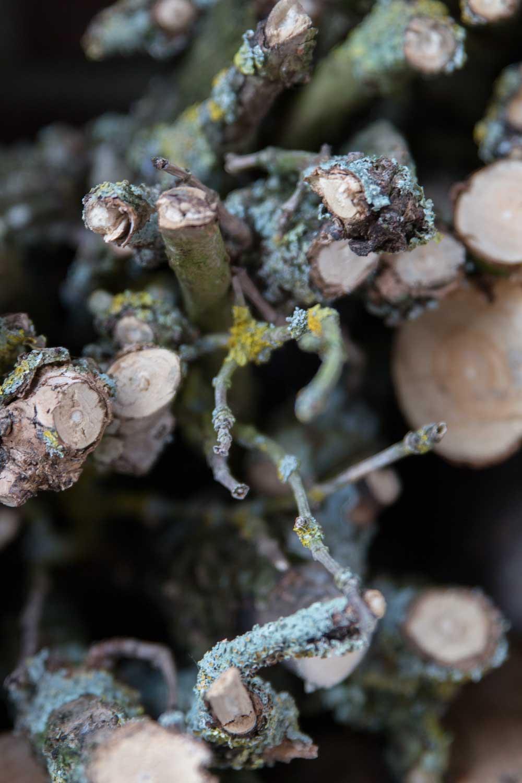 Holz im Garten steinbauer-groetsch©2016