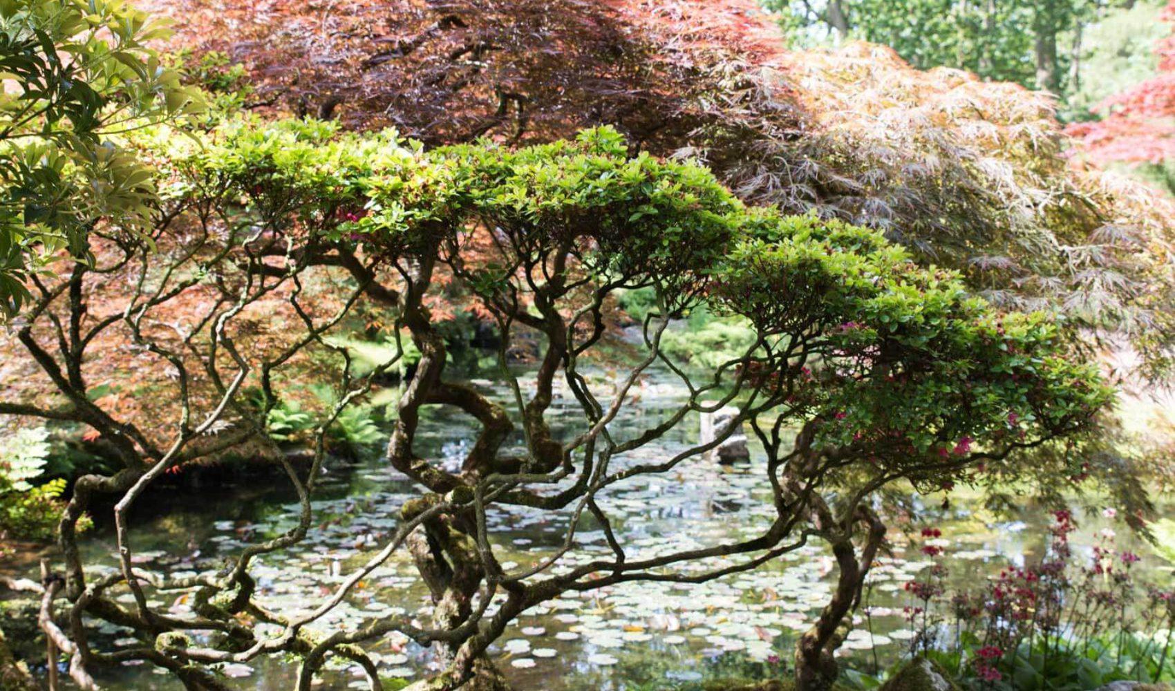 Fototagebuch 3: Japanischer Garten Den Haag