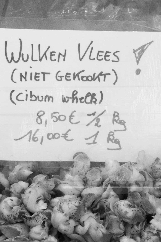 Wellhornschnecken
