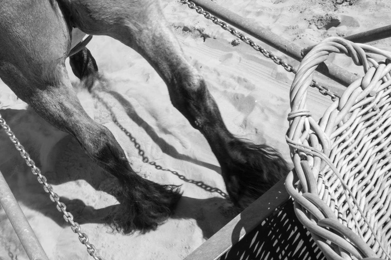Krabbenfischer zu Pferd Oostduinkerke