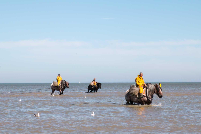 Krabbenfischer zu Pferd Flandern