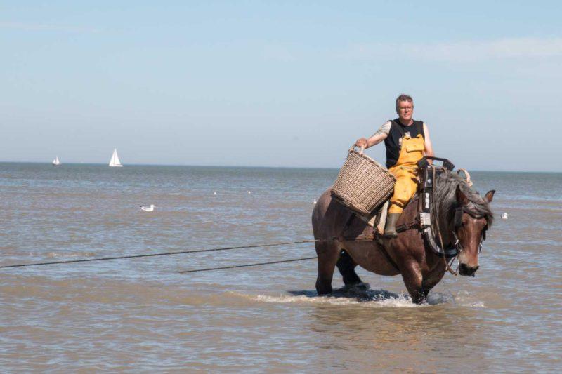 Die Pferdefischer von Oostduinkerke