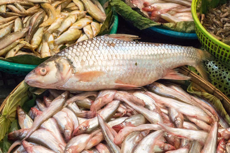 Fische Kambodscha
