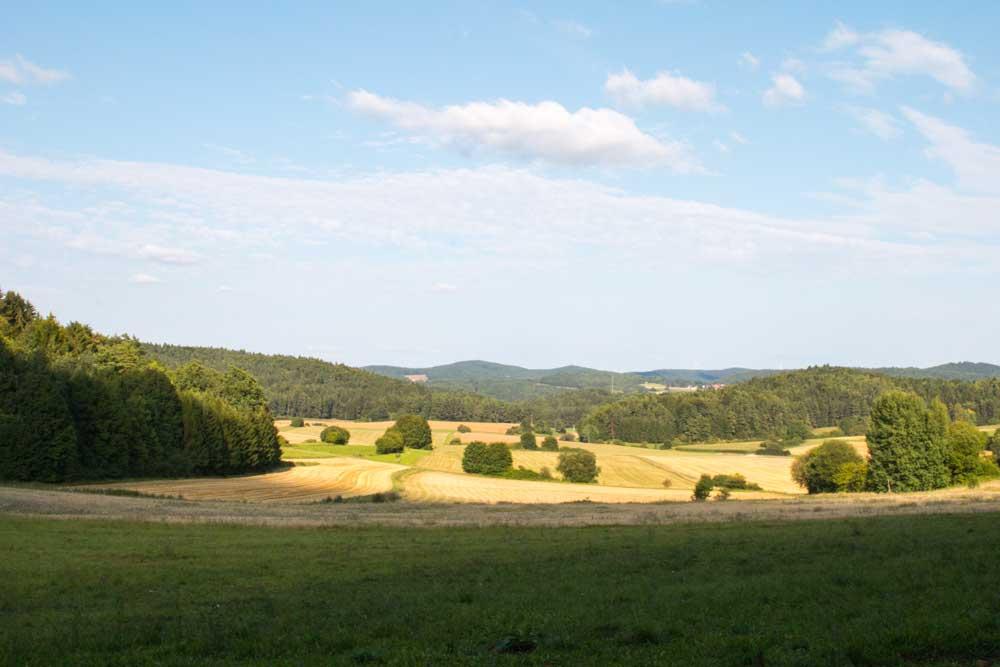 Weideschweine Lieritzhofen