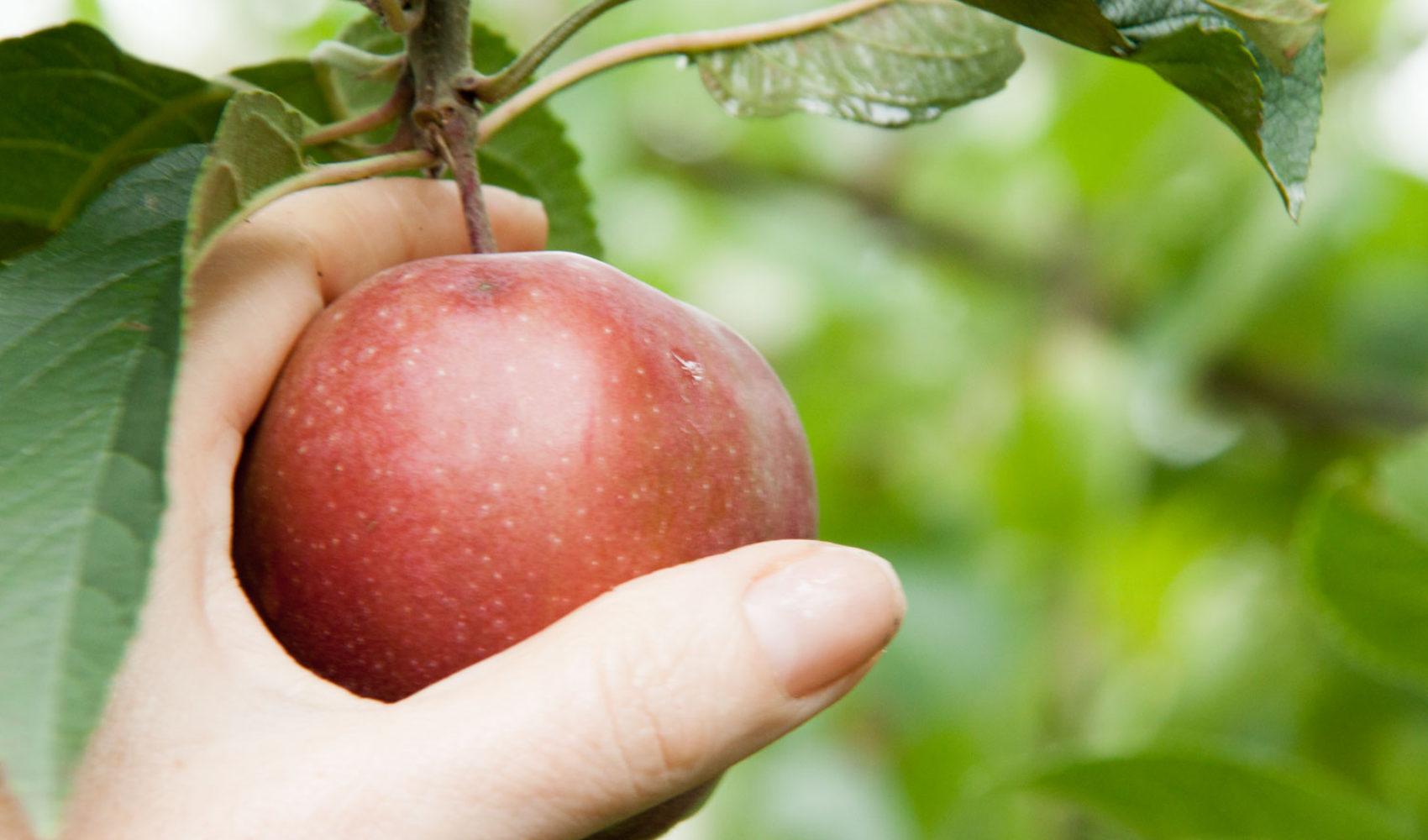 Werbung! re:MIND - Nachhaltigkeit ist ein Apfelbaum